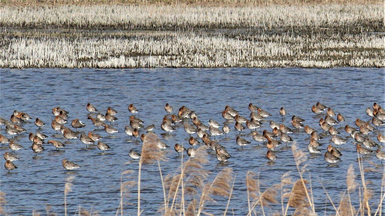 Topjaar voor weidevogels dankzij kou en nattigheid in Midden-Delfland
