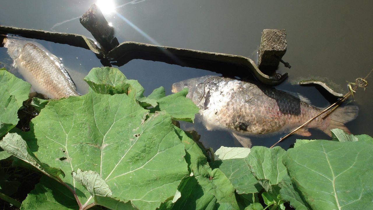 Dode vissen gemeld in Delflandgebied