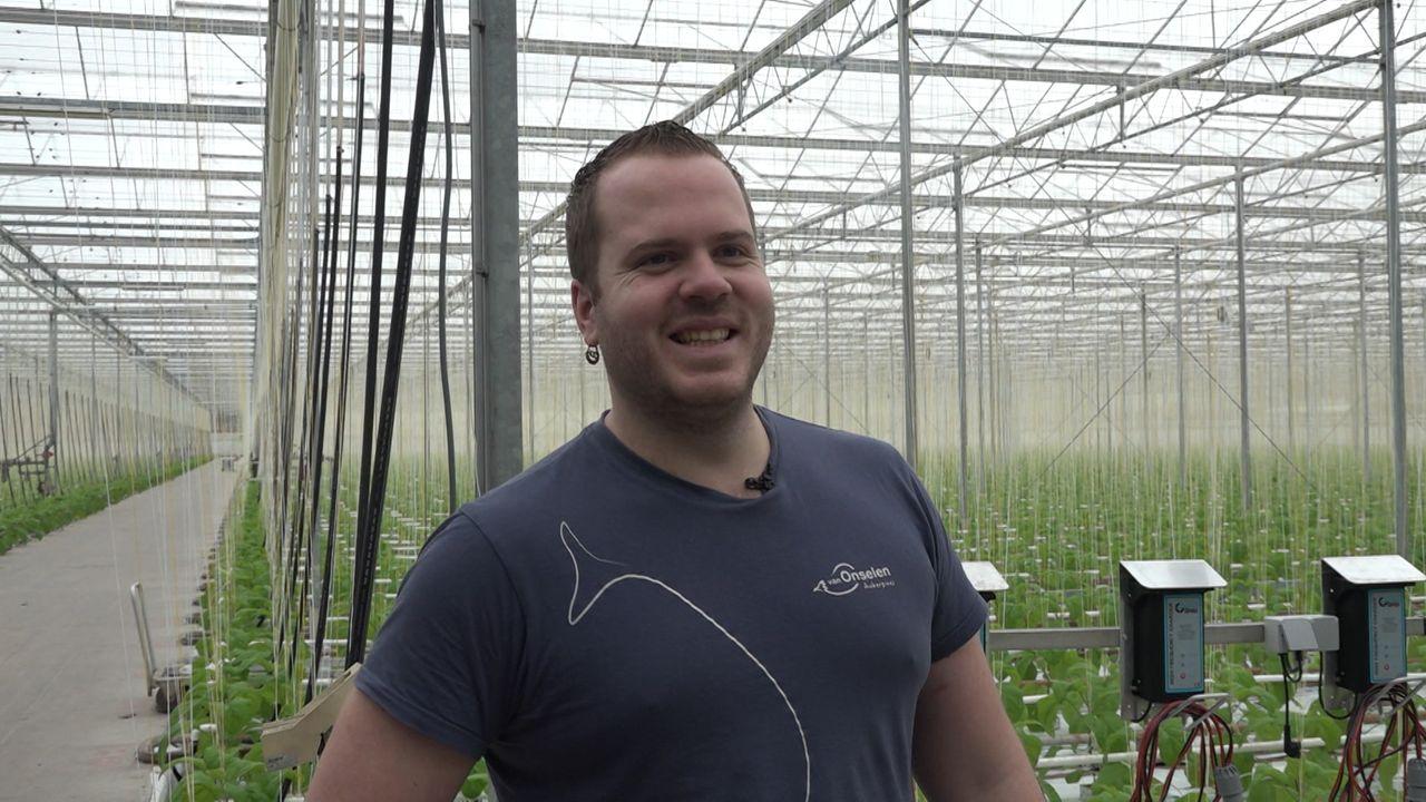 Veiling eerste kistje aubergines levert 9.000 euro op
