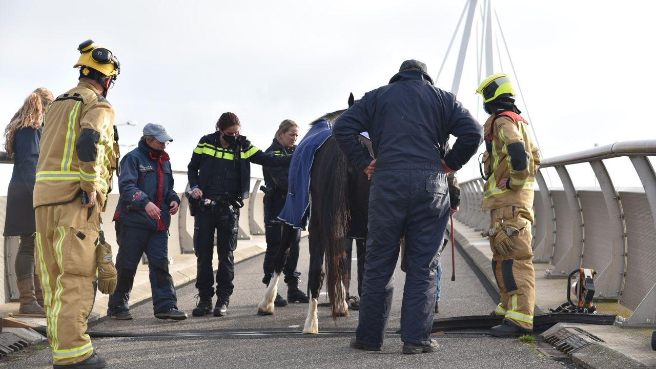 Paard vast op fietsbrug Snelbinder