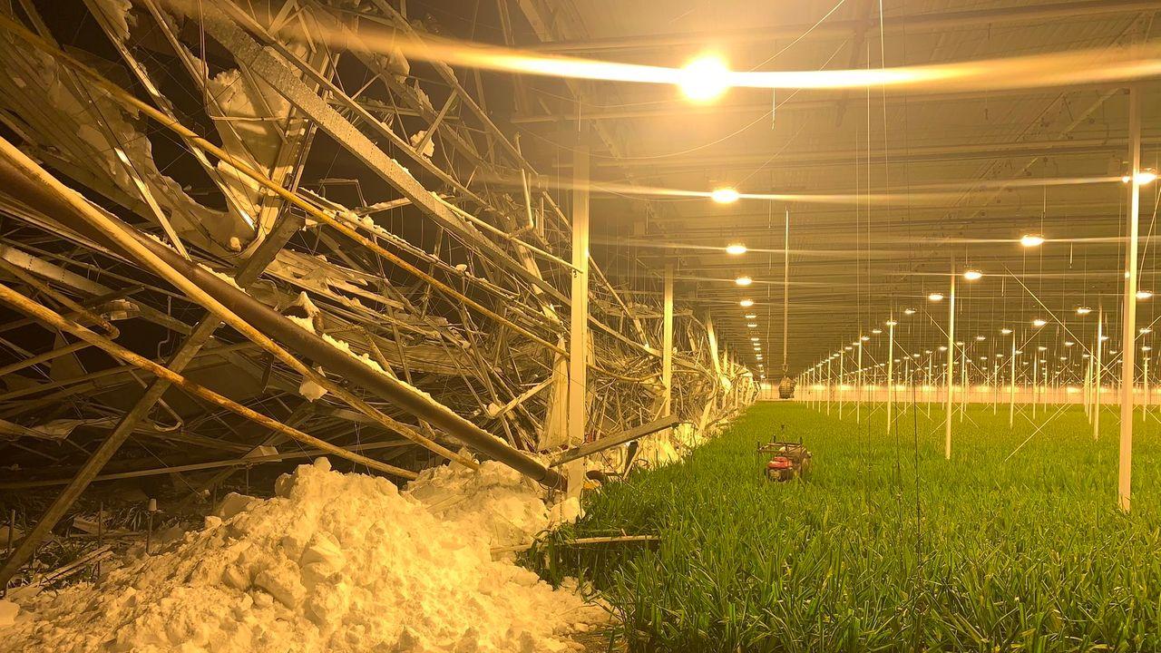 Sneeuwschade glastuinders loopt naar de 40 miljoen euro
