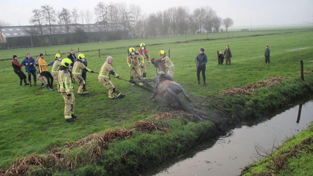 Brandweer helpt paard op de kant