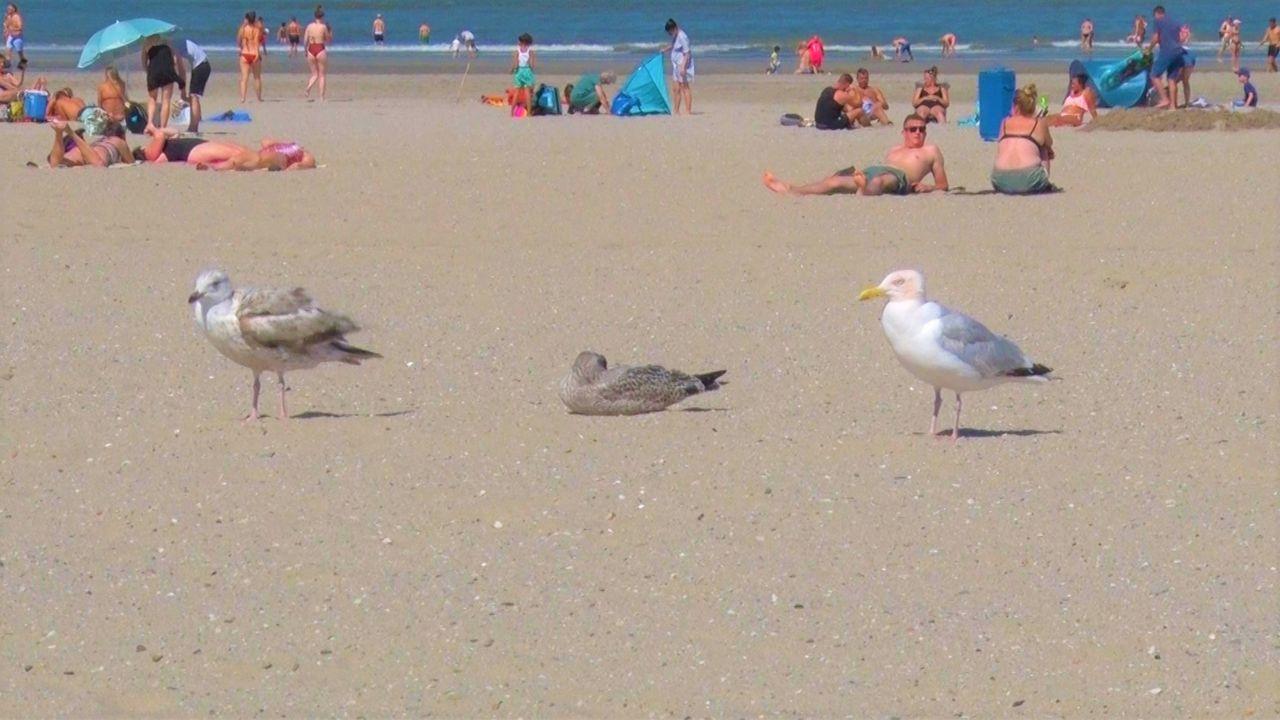 Hoekse strand is vol