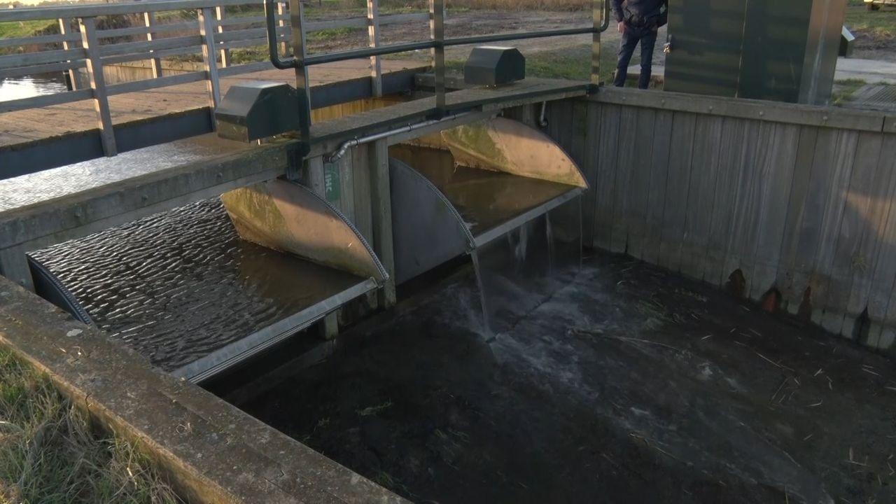 Sluis in Kraaiennest open voor weidevogels: 'Ze kunnen komen!'