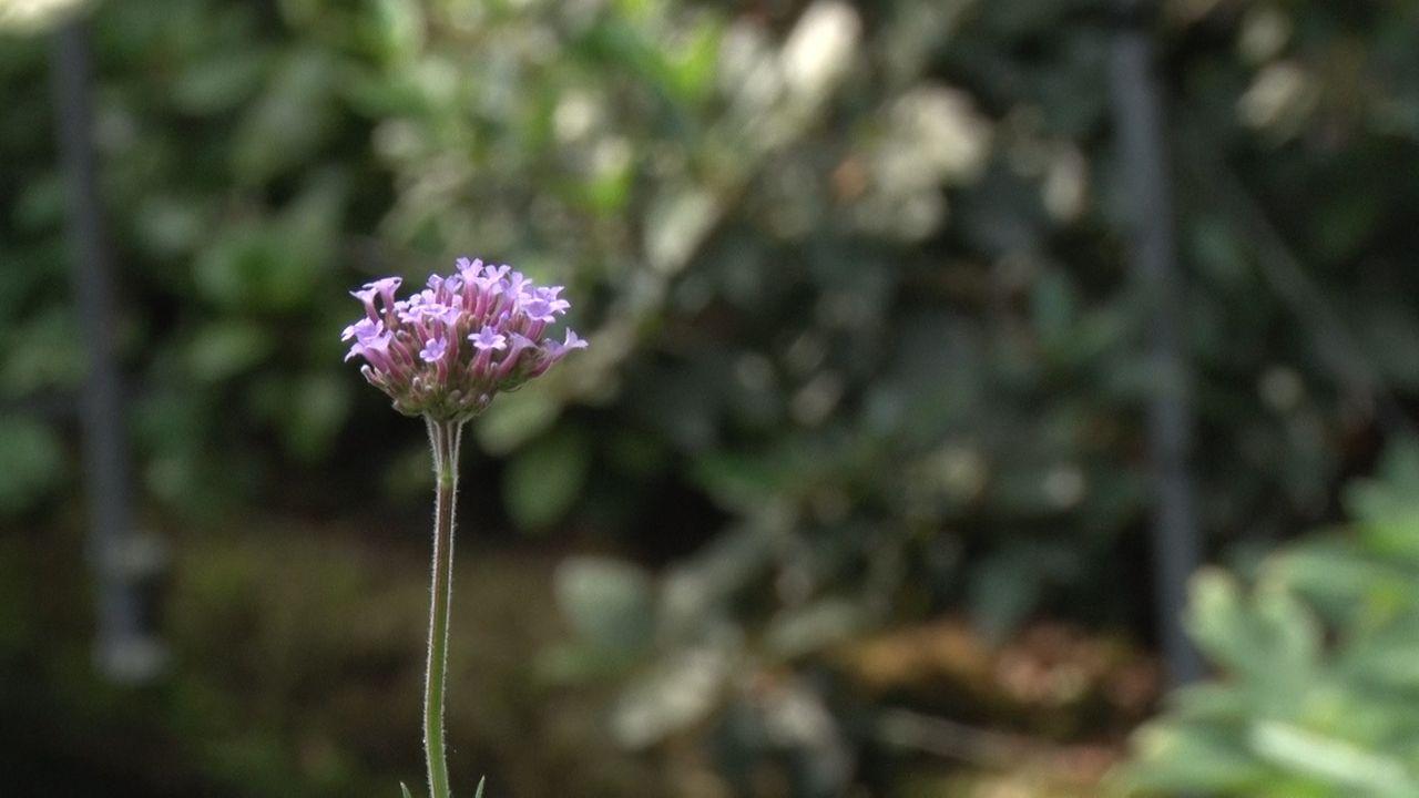 Maassluis zoekt regenbestendige tuinen