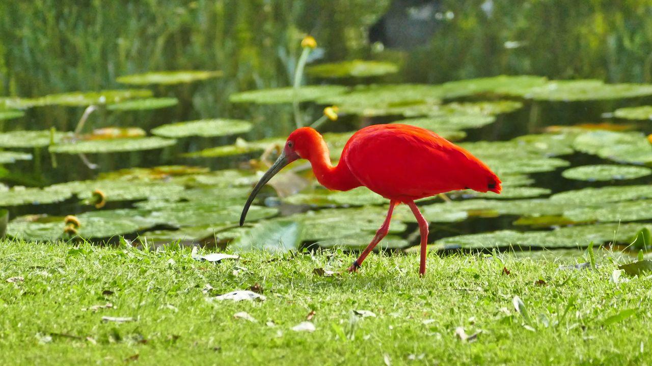 Bijzondere vogel gespot in het Hofpark: 'Waarschijnlijk ontsnapt uit een dierentuin'
