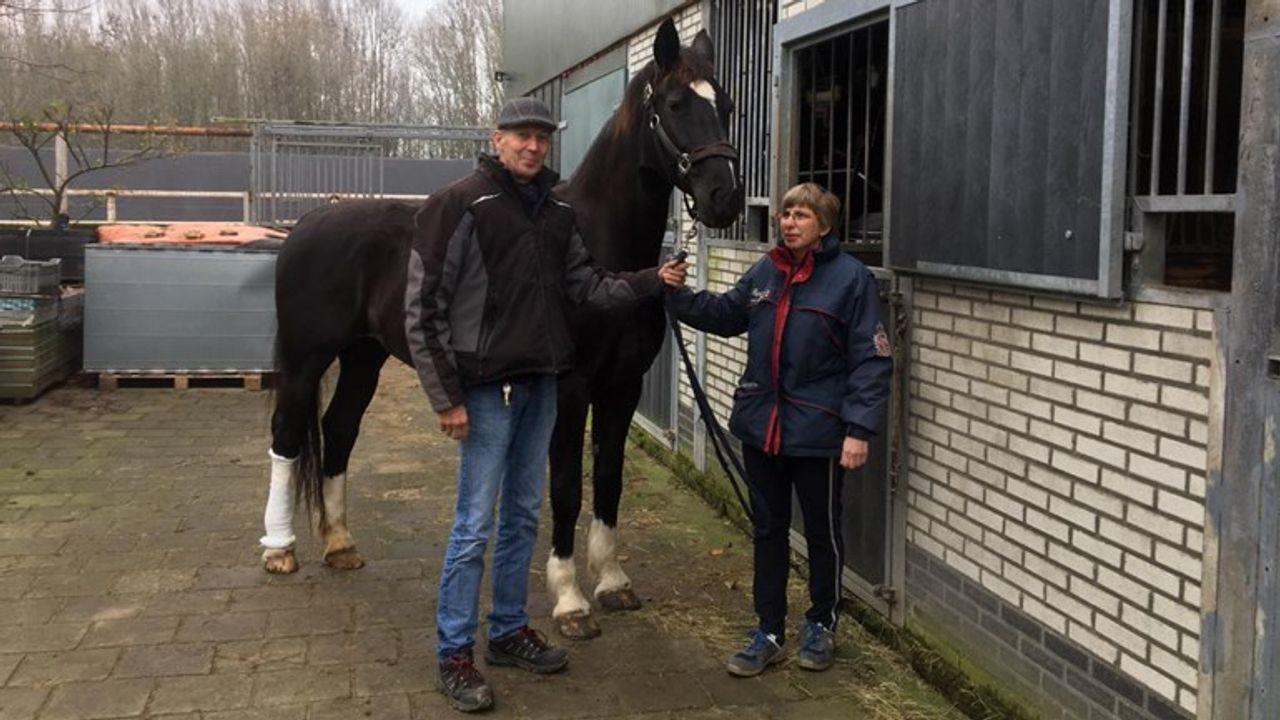 Paard Dieralda zat klem: 'Een wonder dat ze het overleefd heeft'