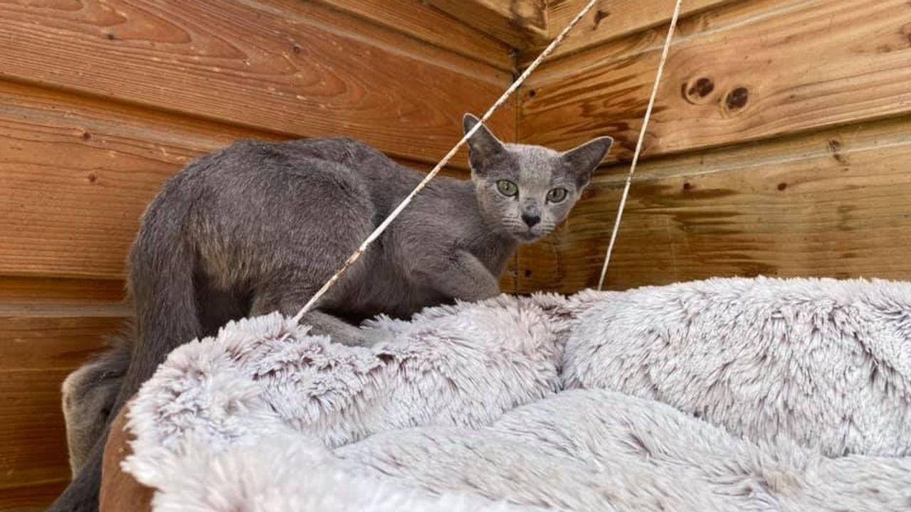 Verdwaalde kat uit Schotland na drie weken gevonden in Naaldwijk