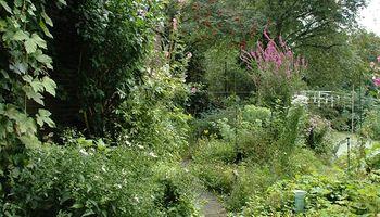 Digitaal Natuurcafé: De Natuurrijke Tuin