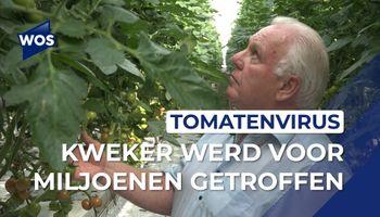 Kweker werd voor miljoenen getroffen door tomatenvirus