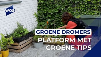 Westlands platform met groene tips